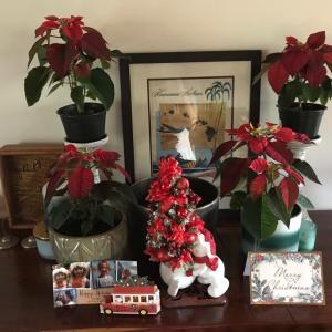 我が家にクリスマスツリーがやってきた