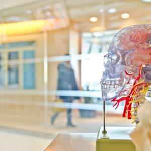 できるだけ多くの情報を処理できるように、効率の良い脳の使い方を知る!