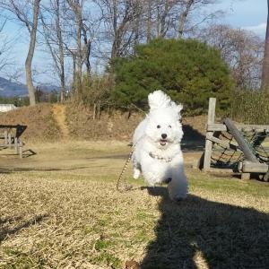 重要☆愛犬との暮らしで最も大切な事 【あなたは、愛犬から信頼されるリーダーになれていますか?】