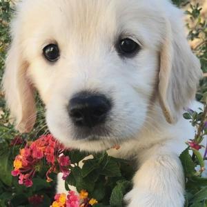 【フードやワクチン。。。もし愛犬の健康を全く無視したモノだったら?】