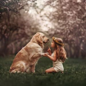 愛犬の病気を劇的に減らす方法 ~をやめるだけ