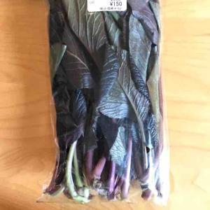 紫小松菜(リクガメのご飯紹介26)