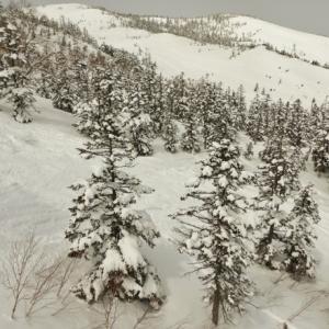 ●「雪ぐ」