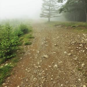 ●「石尾根~雲取山」尾根通しトレラン.後篇