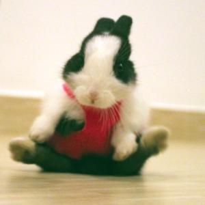 ウサギメイク