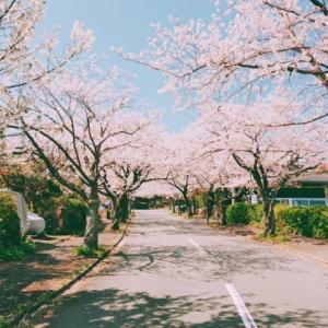 城ケ崎 桜満開