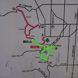 里山の倒木偵察・・・長官山(254m)~瀞台(273m)