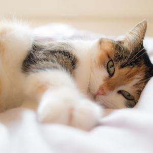 40代は徹夜しない方がいい。猫もBBAも次の日しんどい。