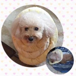 愛犬の病気が人のお役に立ちました(*^ω^*)