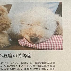 わんこが新聞に載りました〜(ᵔᴥᵔ)