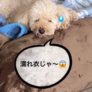 夫の癖にイライラと笑い(^^;;