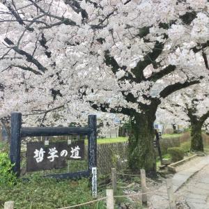 花盛りの哲学の道