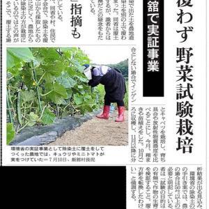 除染土野菜