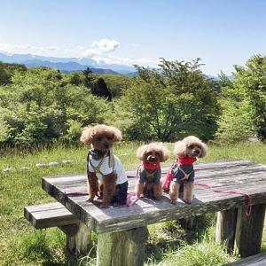 茶臼山高原の芝桜(旅行2日目)