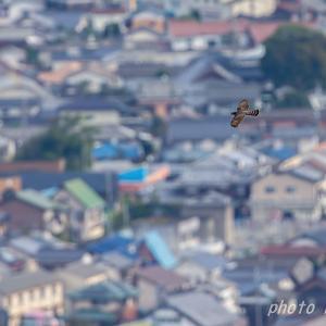 ハイタカ  クリアランス 1