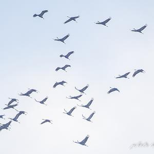 芦原観察 12月03日  頭上