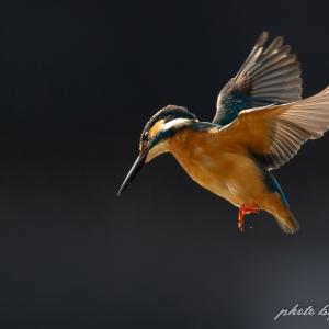 SS何分の一で、ホバリングの羽は止まるか  撮影日:02月06日