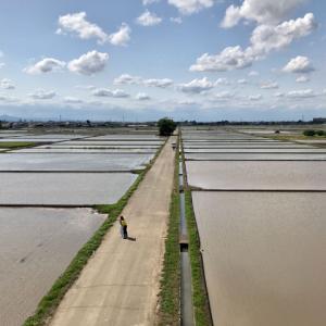 田植え前、広大な水面が現れる川越・古谷本郷