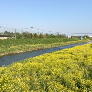 川越五河岸、扇河岸から新河岸・寺尾河岸の舟運跡を歩く