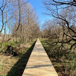 湿地の生態系が残る「三ツ又沼ビオトープ」、早春の散歩