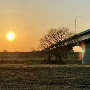 入間川 冬の散歩記録(7)入間大橋〜上江橋
