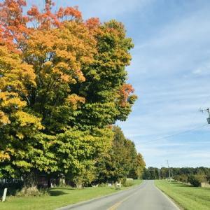 紅葉と黄葉が着実に進んでいます