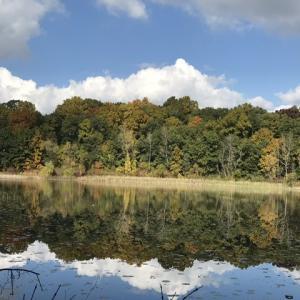 鏡池に写る木々も色づいてきました