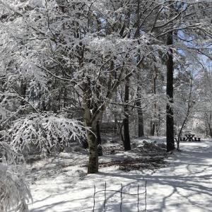4月の朝の真っ白な庭
