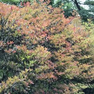 紅葉&黄葉が始まりました