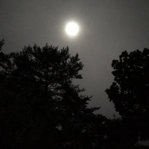 森の中の中秋の名月