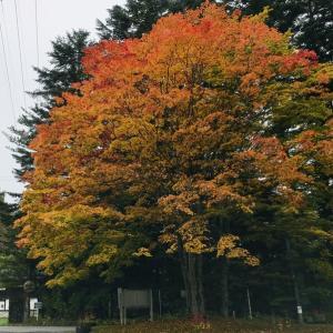 鮮やかな色の木々