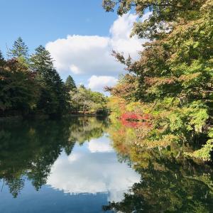 今日の雲場池