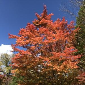 日々進む紅葉&黄葉