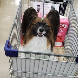 一緒にお買い物へ♪