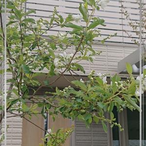 櫻庭の花 4月1週目