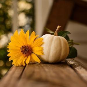 秋の過ごし方