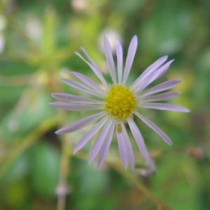 ウォーキング途中の小花たち