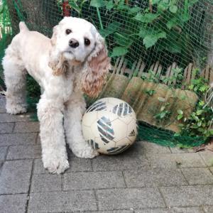お転婆娘はサッカーがお好き