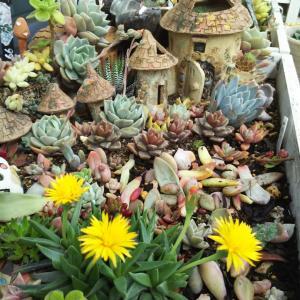 黄色いお花がかわいい&レース糸の耳飾りと耳飾りDIY