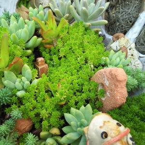 動物の森風に育つセダム多肉花壇 とカラオケで新曲披露