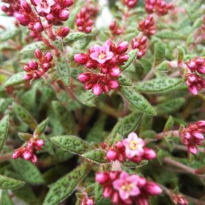 クーベリーの花と大好きな鉢に寄せ植えとハンドメイド