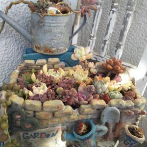 陶芸手作り鉢の多肉植物とレース地とタティングレースでマスクカバー完成