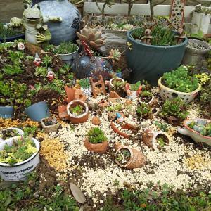 北側多肉花壇  荒れた花壇の植え替え模様替え