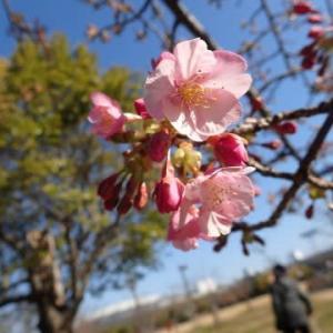 早春の長居植物園