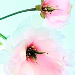 花々は人間の営みと一緒