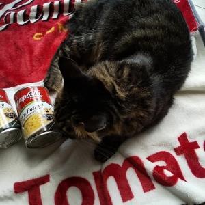 猫さまも喜んだ!?カルディ限定「キャンベルスープ・ブランケットセット」