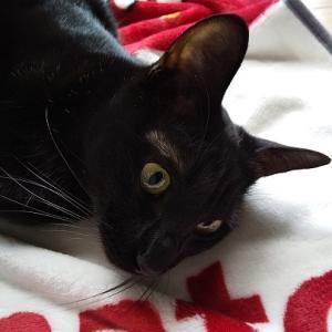 黒猫LOVE♪