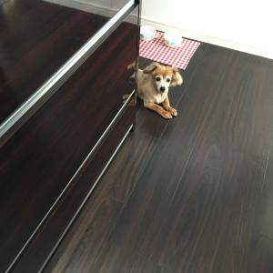 台所に立つと。