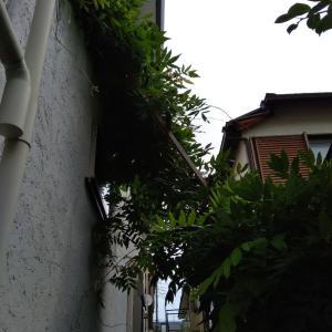 2020/7/11 窓から見える緑