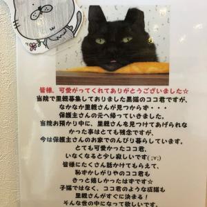 ココくん正式譲渡へ!!